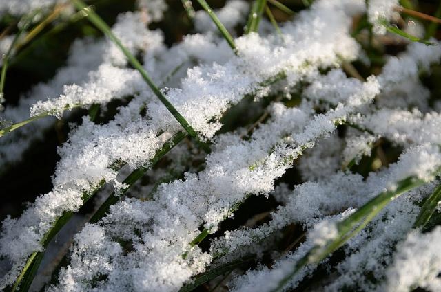 Первый снег выпадет в пятницу ночью