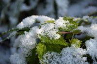 В Перми и Пермском крае пойдёт снег.
