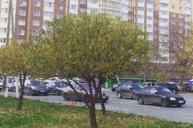 Разросшиеся ивы на улице Ямской в Тюмени привели в порядок
