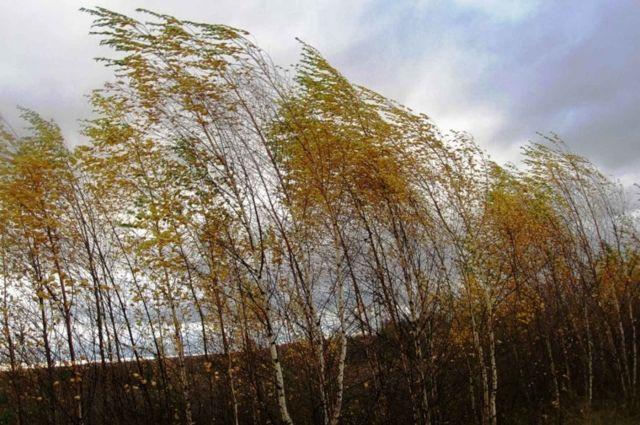 Похолодание в Новосибирской области продолжится. Рабочая неделя начнется всего с +2 градусов в дневное время.