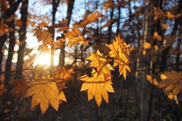 Потепление начнется уже завтра, 20 октября. Несмотря на небольшой дождь в дневные часы, днем будет довольно тепло.