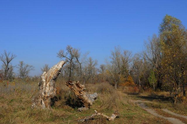 В Матвеевском районе многодетным семьям выдали земли под строительство без проведенных коммуникаций.