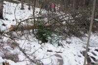 Деревья повалило ветром, удалять последствия придется несколько недель.