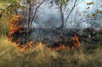 В районе очистных сооружений в Оренбурге потушили 2 гектара загоревшейся сухой травы.