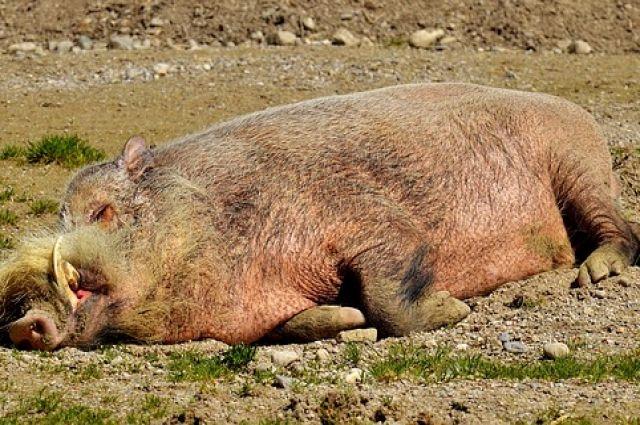 С начала года в регионе произошло 112 ДТП с дикими животными.