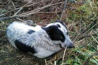Собаке сделали укол обезболивающего, к ней должны приехать и забрать в Пермь.