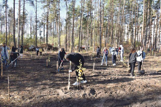 Восстановление Северного леса стало настоящей народной акцией.