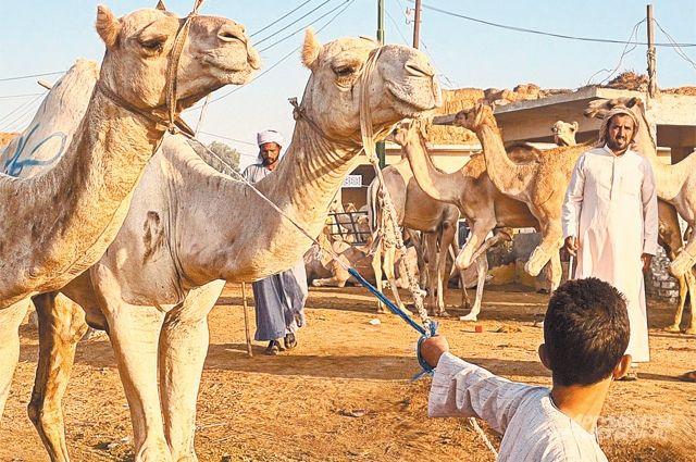 Египет лишь выглядит архаично, на деле же это первая экономика Африки. ИРоссия может заработать на сотрудничестве с ней.
