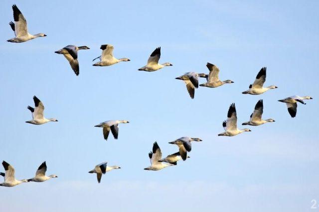 Ученые исследовали полет птиц для создания новых летательных аппаратов
