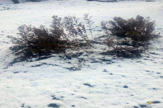 Обильный снегопад прошел в ночь с 23 на 24 октября в Доволенском районе НСС.