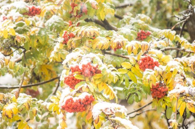 В большинстве районов Оренбуржья пойдет мокрый снег.