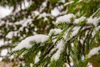 Оттепель принесет с собой мокрый снег.