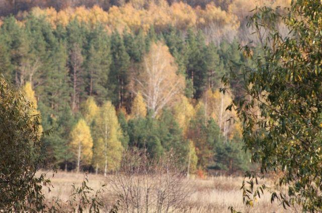 Погода в Хабаровском крае и ЕАО на 27 октября