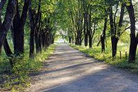 Срубленные деревья компенсируют новыми посадками.