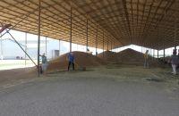 В Новосибирской области собрали хороший урожай зерна.