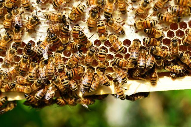 На жительницу Краснодара напал рой диких пчел, на помощь пришли спасатели