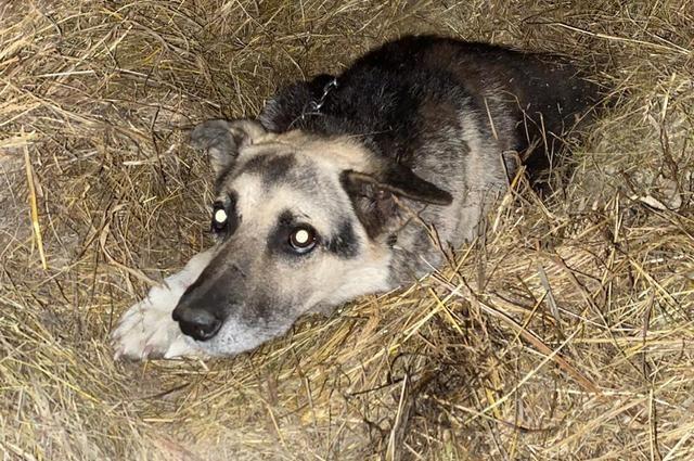 Собака оказалась на улице, но осталась предана своему владельцу.