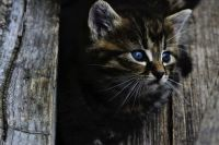 Миндортранс Удмуртии ищет дом спасенному котенку
