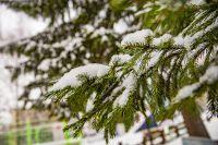 Сегодня, в последний день октября, новосибирцев ждет хмурая ветреная погода. Такой прогноз дали синоптики Западно-Сибирского Гидрометцентра.