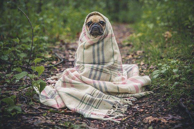 Тюменцам рассказали, как защитить домашнее животное от простуды