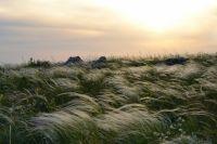 Идея в том, чтобы познакомить туристов со всем разнообразием оренбургской степи.