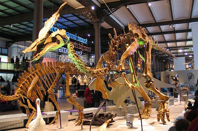 Скелет олоротитана. Королевский музей естественной истории в Брюсселе.