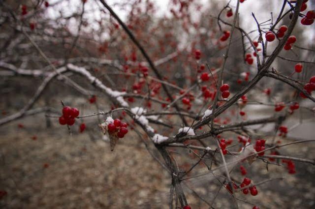 В Новосибирск вернется тепло до +10 градусов.