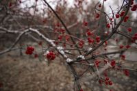 В Новосибирске сохранится неустойчивая погода с сильным ветром.