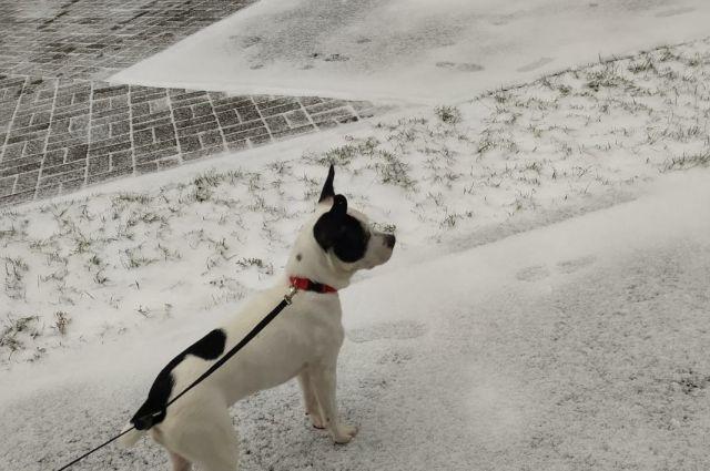 Середина ноября в Сибири — традиционно начало настоящей зимы со снегом и устойчивыми морозами. Когда жителям регионов СФО ждать такую погоду? Сервис «Яндекс погода» опубликовал прогноз.