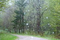 Завтра, 11 ноября, в Новосибирской области ожидается ухудшение погоды. По сообщениям синоптиков Западно-Сибирского Гидрометцентра, возможно усиление ветра до опасных значений — порывов до 20 метров в секунду.