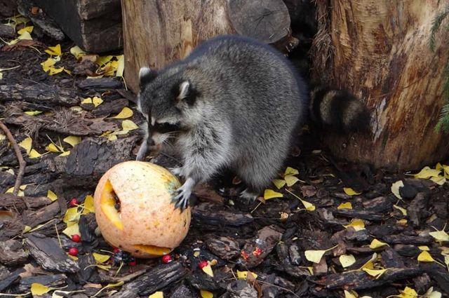 Зоопарк дарит билет за тыкву