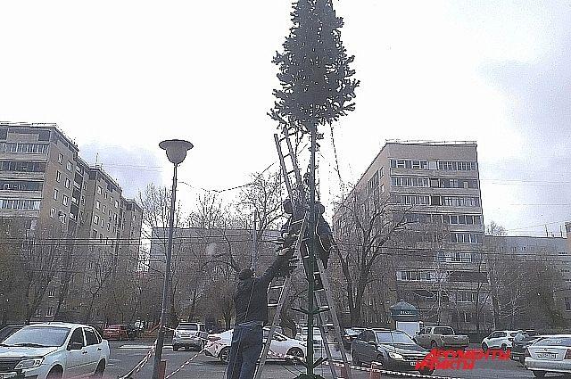 В Оренбурге уже приступили к подготовке к Новому году и начали собирать елки.