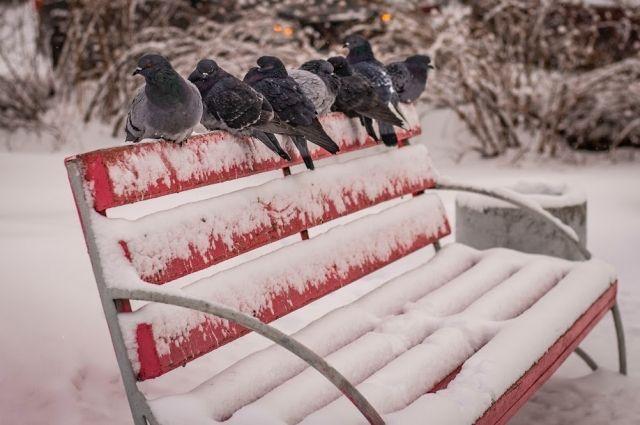 Мокрый снег и сильный ветер сохранятся в Новосибирске.