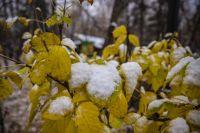 В Новосибирске стоит теплый ноябрь, как 14 лет назад.