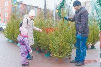 1 декабря в Новосибирске откроются елочные базары. Сейчас предприниматели города заключили с мэрией 30 договоров на размещение площадок для торговли новогодними деревьями.