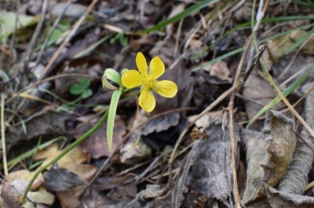 Цветок обранужили 10 ноября.