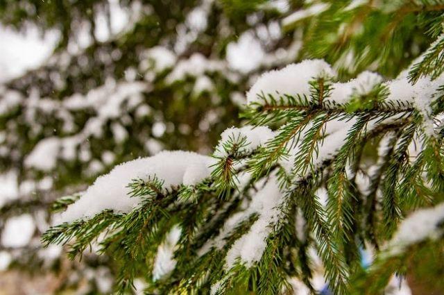 Небольшой снег обещают в Новосибирске утром понедельника.