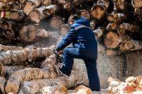 Лесопилки всё лето заготавливают доски, а продукты деятельности сжигают осенью.