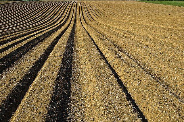 Тюменский район принял участие в соревнованиях сельхозпроизводителей