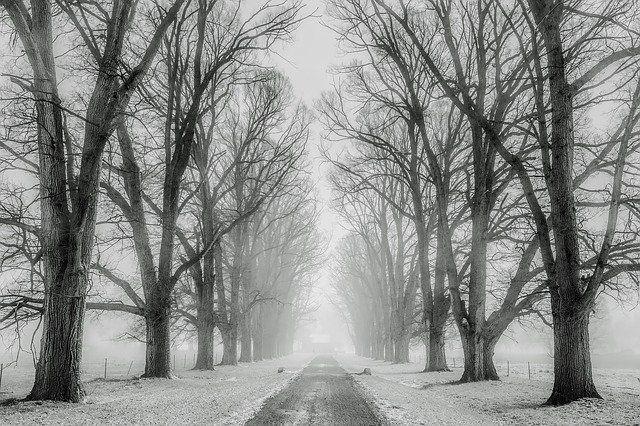 Синоптики Западно-Сибирского Гидрометцентра уточнили прогноз погоды в Новосибирской области на сегодня, 16 ноября. По их данным, жителей региона ждет снег, небольшой мороз и мощный ветер.