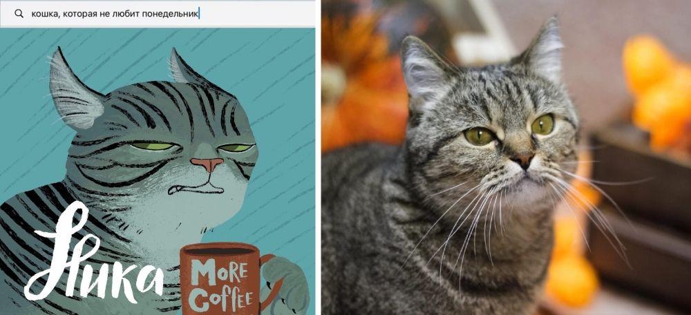 Проект «Твоя идеальная кошка приюта «Матроскин».