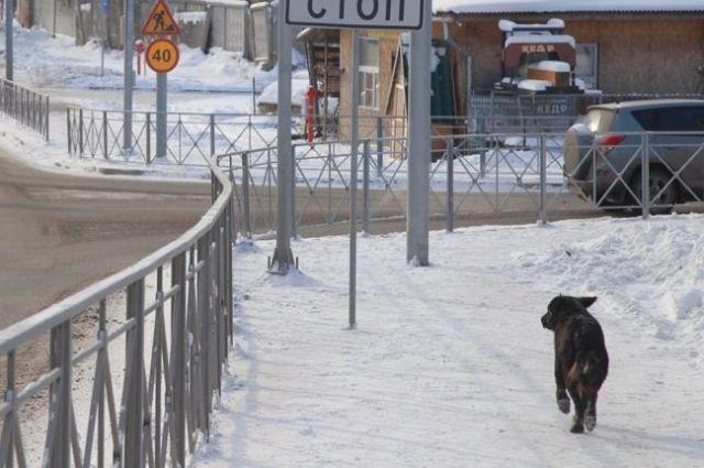 Забор безопасности на улице Новогодней не отделяет пешеходов от движущегося транспорта, а мешает проходу.