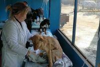 Животных из Карлука обследовали ветеринары, у всех питомцев - букет заболеваний.