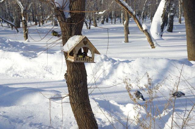 В ближайшие дни температура воздуха в городе будет опускаться до -22 °С. Минимальные температуры ожидаются ночью, но и днем будет морозно.