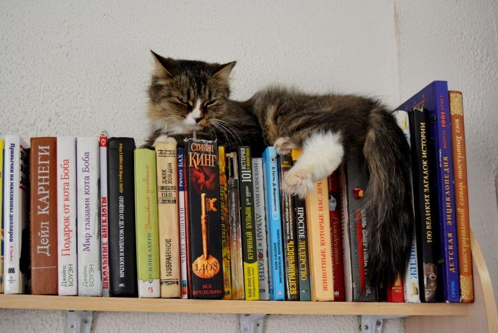 В котокафе можно провести время за увлекательной книгой.