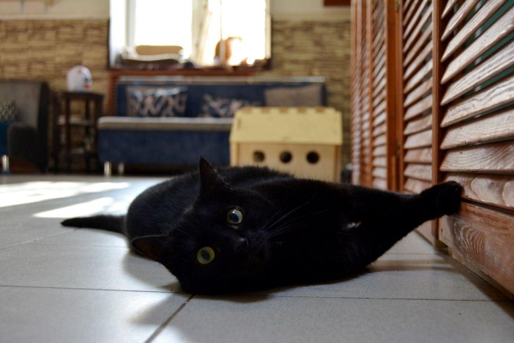Катарина - молодая и очень разговорчивая кошка.