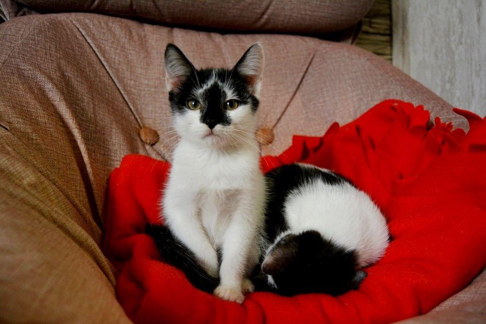 Люба и Мира родились этим летом. Как и все котята, очень игривые и непоседливые.