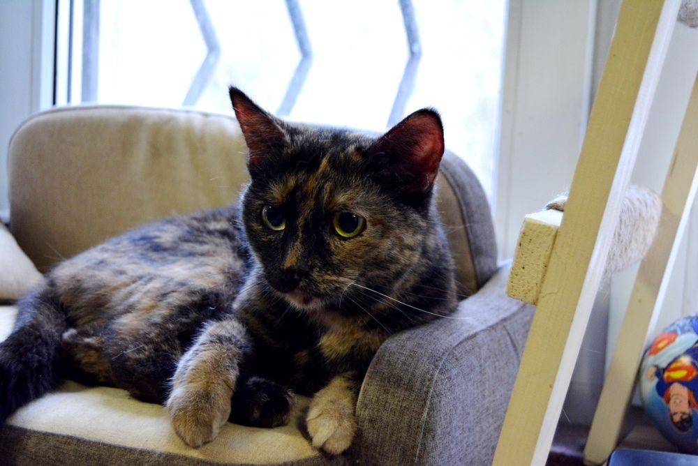 Буся - ещё одна молодая и ласковая кошка.