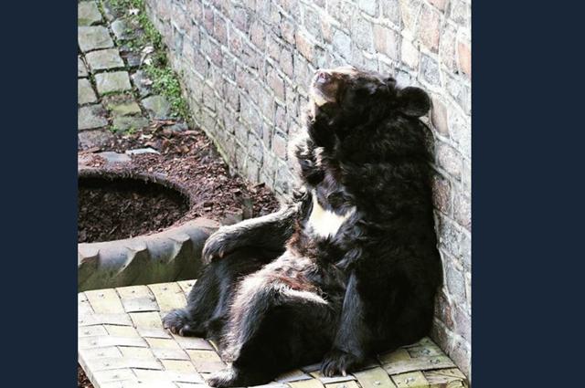 Звери калининградского зоопарка получили в подарок пожарные шланги