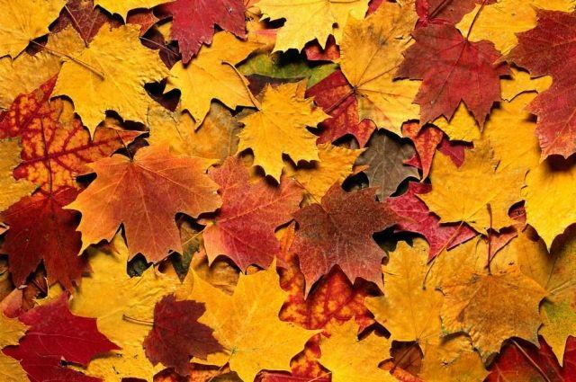 Новый тренд. Как правильно убирать и утилизировать опавшую листву